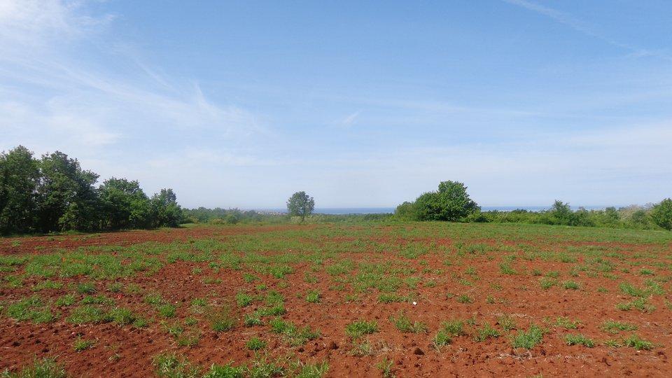Grosse Landwirtschaftliche Gelände