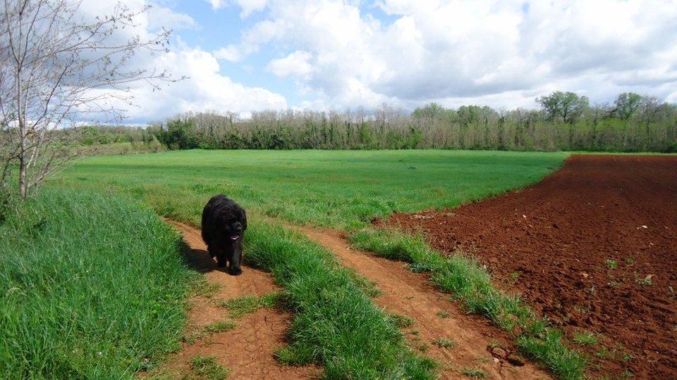 Terreno agricolo grande  -Urgente Vendita